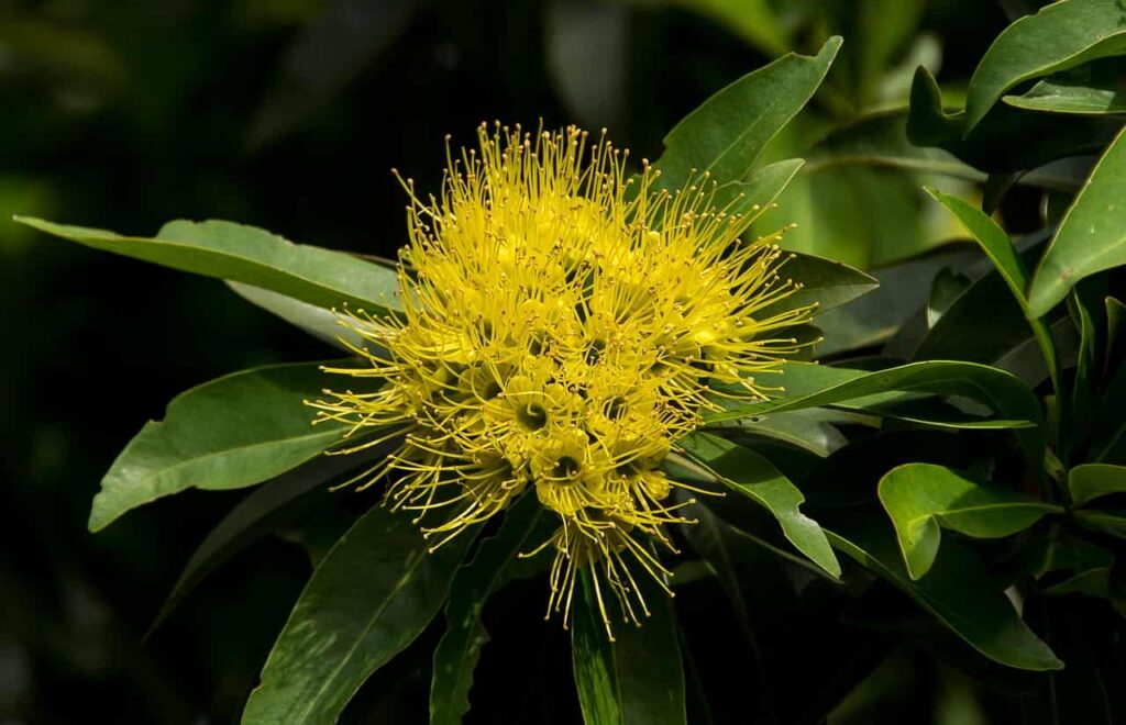 list of perennial flowering plants in india