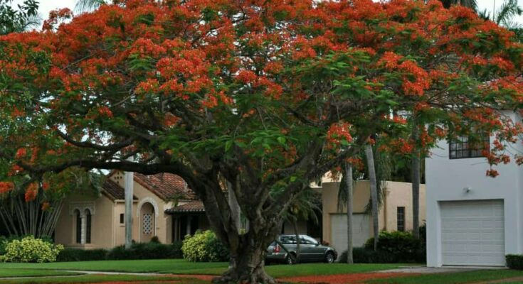 flower tree images with name,gulmohar