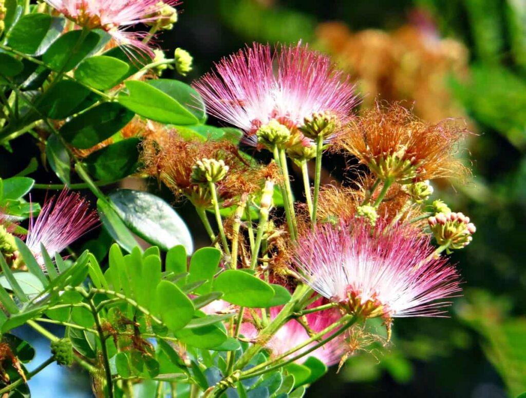 name of flowers grow on trees in india,rain tree