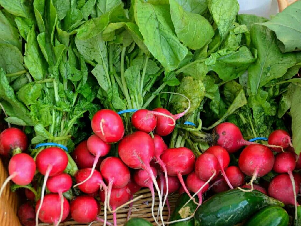 Vegetables that can be grown in pots at home