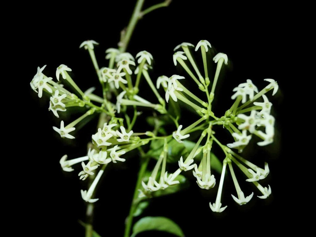 flowers used as medicine in india